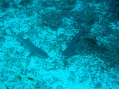 IMG2923-shark2-small.jpg