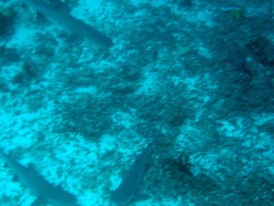 IMG2925-shark3-small.jpg