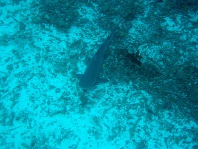 IMG2930-shark1-small.jpg