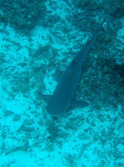 IMG2930-shark4-small.jpg